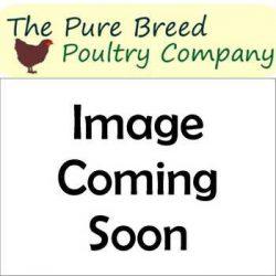 Partridge Leghorn